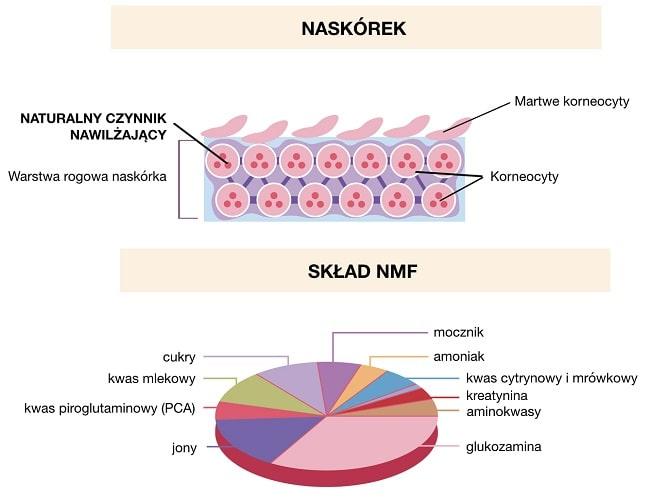 NMF to naturalny czynnik nawilżający obecny w naskórku składający się z mieszaniny składników