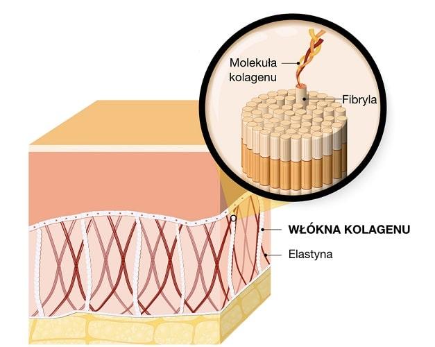 Kolagen jest głównym składnikiem skóry, nadającym jej jędrność