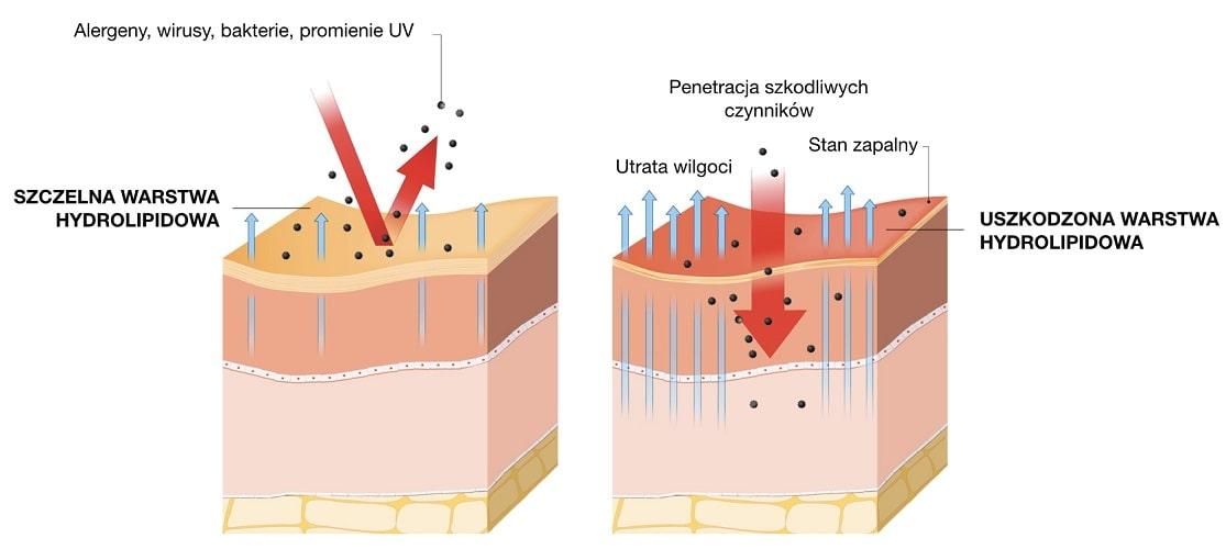 Warstwa hydrolipidowa chroni skórę przed szkodliwym wpływem środowiska i przesuszeniem