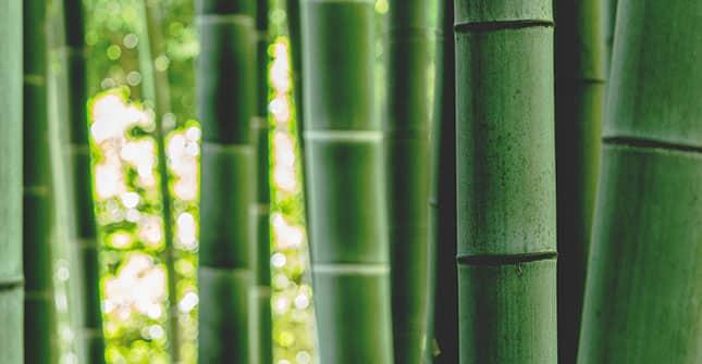 Ramnoza jest pozyskiwana roślin, m.in. z bambusa