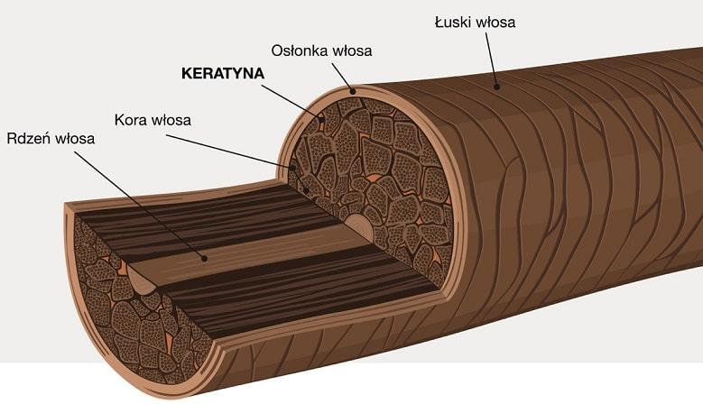 keratyna to białko, z którego zbudowane są włosy paznokcie i częściowo naskórek