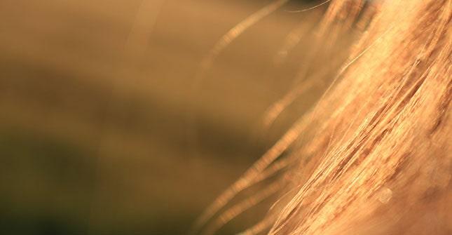 Łysienie telogenowe jest zależne przede wszystkim od czynników zewnętrznych